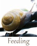hedgehog-care-rescue-sanctuary-feeding